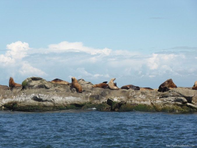 Vancouver-Whale-Watch-Stellar-Sea-Lions